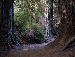 Redwood NP&SP (Californml;	).